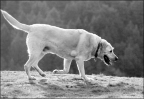 Lipomas in Dogs: An Unconventional Approach