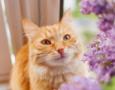 Common Flower Essences for Pets