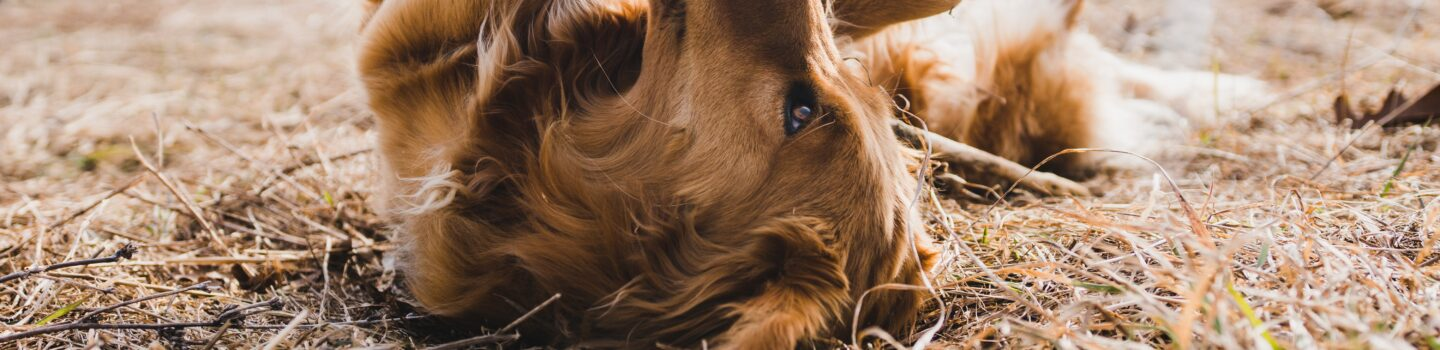 Testing for Food and Environmental Sensitivities in Pets