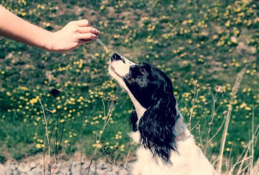 How To Give Flower Essences To Pets