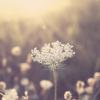 A Flower Essence Healing for Trauma and Seizures