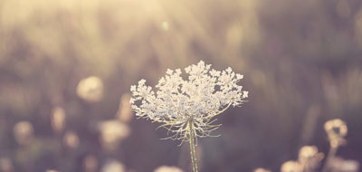 Flower Essences: A Soothing Treatment for Turbulent Times